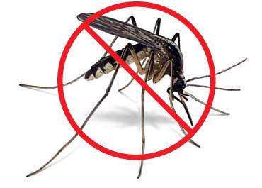 Evita las picaduras de mosquito de forma natural